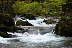 奥入瀬渓流の清流