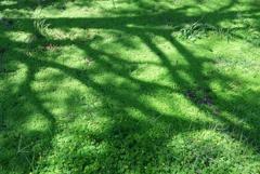 GREENと影