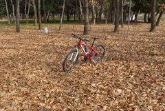 落ち葉の絨毯 (1)