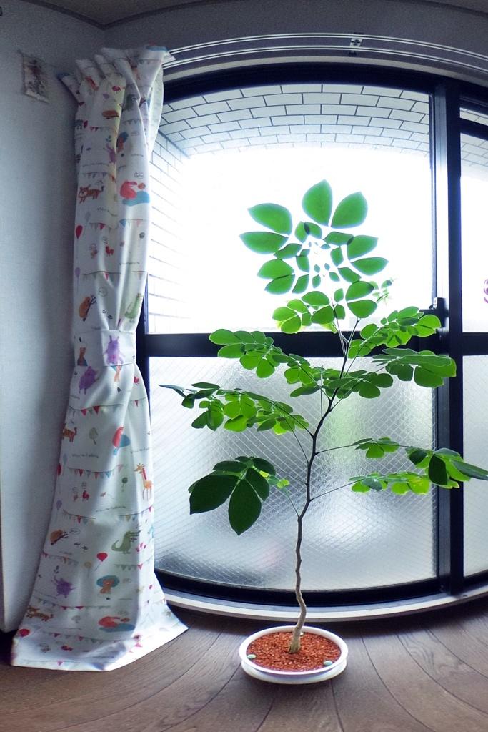 我が家の この木なんの木