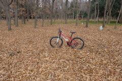 落ち葉の絨毯 (2)
