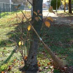 落ち葉の季節