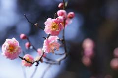 梅 ~春はすぐそこ~