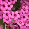花色季節 ピンクな花#4