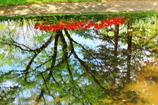 水面の中の景色