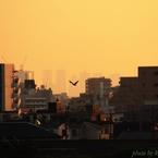CANON Canon EOS 60Dで撮影した(『第38回隅田川花火大会』が始まるまで・・・#6 鳥の向うに都庁)の写真(画像)
