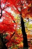 葉色のハーモニー#1