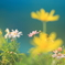花色季節 近所の花#19