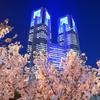 ピンクの桜と蒼い都庁〜18年ver