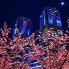 ピンクの桜と蒼い都庁~その3