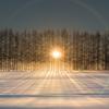 防風林と朝日