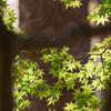 木陰の眺め