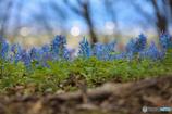 遅い春の到来