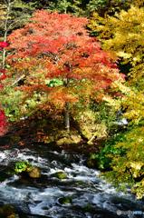 阿寒川の紅葉