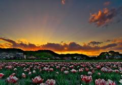 夕空に咲く2