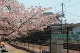 阪急電車とサクラ