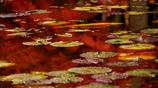 水に溶けた秋