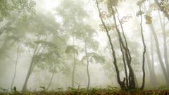 全ては霧の中