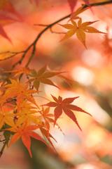 秋は速足で