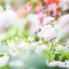 美しい花がある。花の美しさといふ様なものはない。