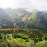 NIKON NIKON D750で撮影した(高原の錦秋 1)の写真(画像)