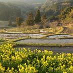 NIKON NIKON D7100で撮影した(里山の春)の写真(画像)