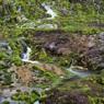 NIKON NIKON D750で撮影した(チャツボミゴケ公園 (9))の写真(画像)