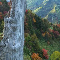 その他のカメラメーカー その他のカメラで撮影した(草津白根山高原ルート (1))の写真(画像)