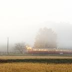 NIKON NIKON D7100で撮影した(霧の朝)の写真(画像)