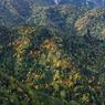 NIKON NIKON D300で撮影した(草津白根山 (8))の写真(画像)