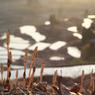 NIKON NIKON D7100で撮影した(土筆)の写真(画像)