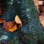 NIKON NIKON D7100で撮影した(黄落の美人林 (5))の写真(画像)