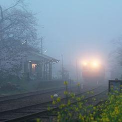その他のカメラメーカー その他のカメラで撮影した(霧の朝)の写真(画像)