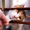 猫の心理  1 愛しい眼