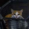 猫の心理 4 愛しい眼