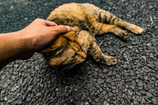猫の心理 2 愛しい仕草と目線