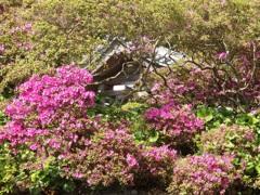 ♪安養院~鎌倉