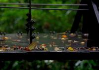 PENTAX PENTAX K-30で撮影した(秋 雨 2 )の写真(画像)