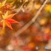 紅葉のイルミネーション
