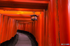京都伏見稲荷の鳥居