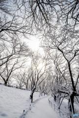 いつもの公園、「雪景色」(4)