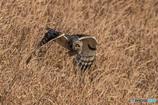 野ネズミの顔(2)