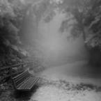 その他のカメラメーカー その他のカメラで撮影した(6月の森で)の写真(画像)