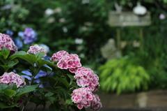 - ガーデンへの誘い -