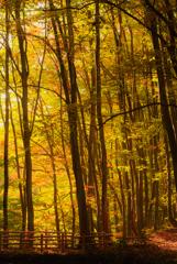 秋の化粧に染まる美人林