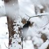 雪の中、現る!