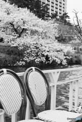 桜の見えるテラス席 2