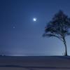 月と金星と名も無き一本木