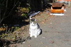 宮ヶ瀬湖畔園地に猫がいた。