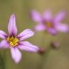 小さな花 ②